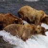 Медведь-рыбнадзор